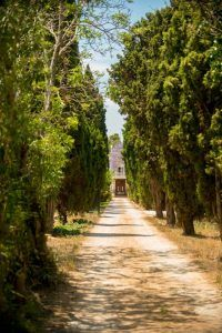 huerto-montesinos-javier-poveda